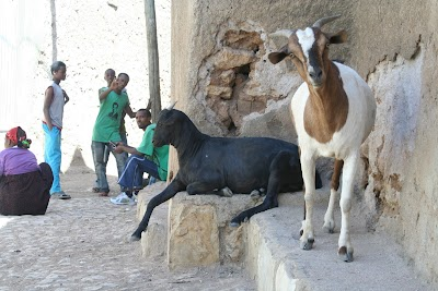 Ethiopia553.JPG