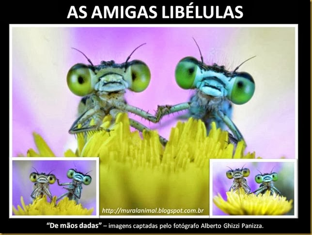 AS AMIGAS LIBÉLULAS
