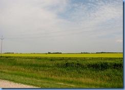 8334 Manitoba Trans-Canada Highway 1 - canola field