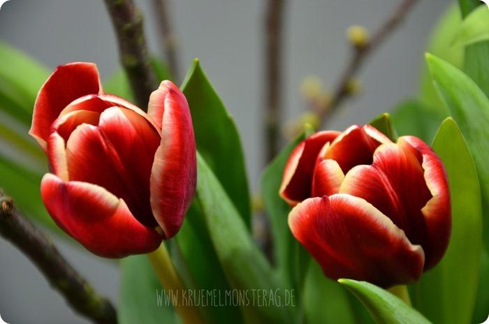 rote Tulpen (08) mit Kirschblütenzweigen am FridayFlowerday