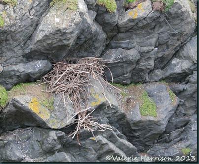 10-ravens-nest