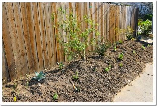 140316_desert_garden_planting7