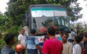 bus-pahala-kencana-masuk-hutan-bersama-truk-semen-beton-jaya-mix-di-blora-jateng