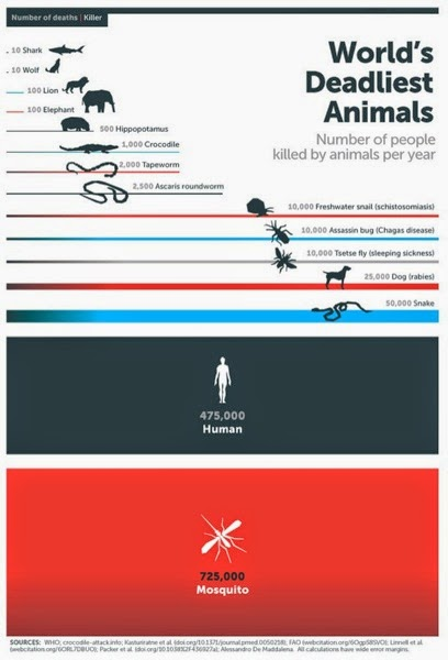 Mosquito Week Infographic