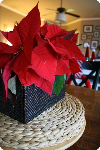 decorating with poinsettias