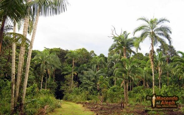 Viaje Amazonas Maloka Makuna  12