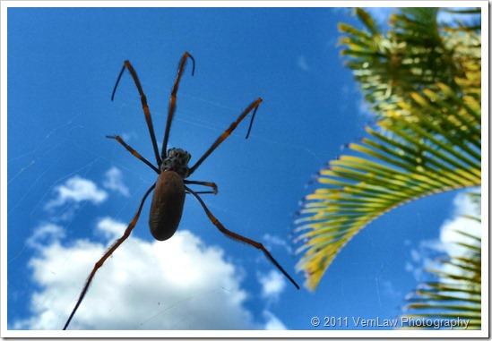 Spideryp1020040