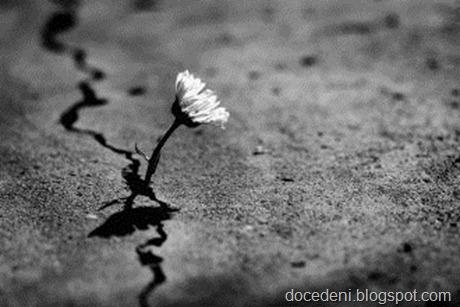 flor no chão
