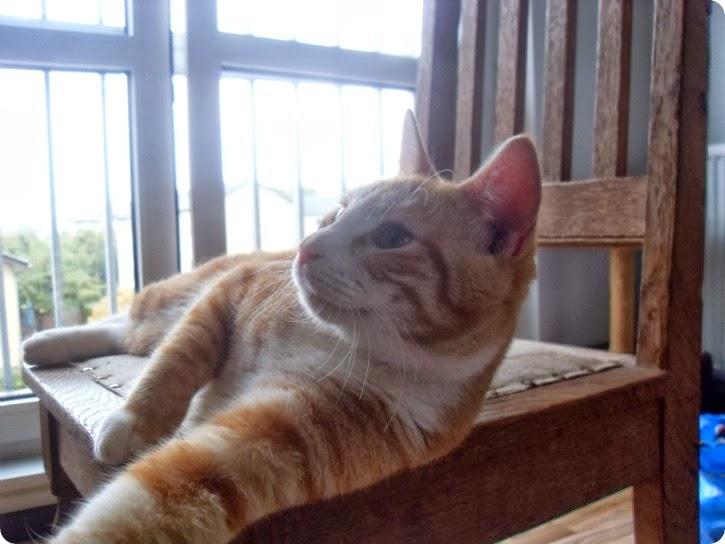 Kattene hos Daniel - Naya