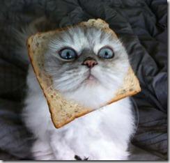 Gatto e pane