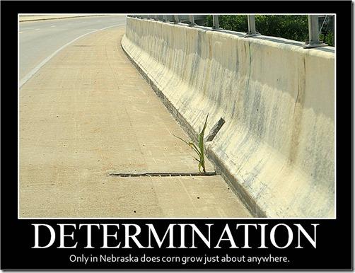 Corn Determination