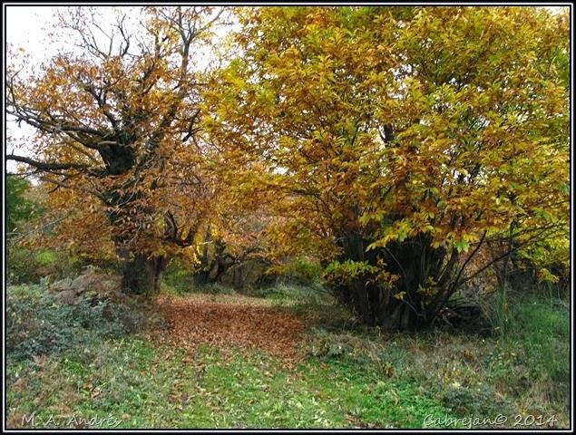 Lantz otoño 016