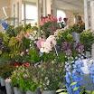 2012-08-02 bloem en groen 08.jpg