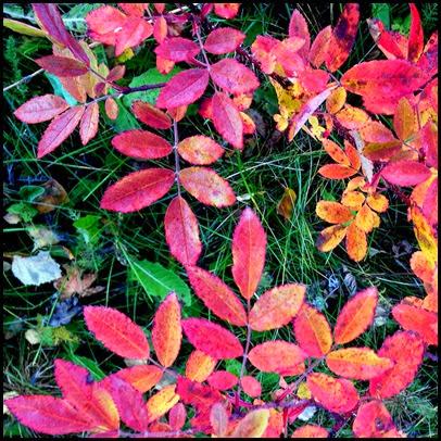 fall_2