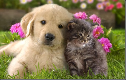 cats-an3d-dogs-wallpapers