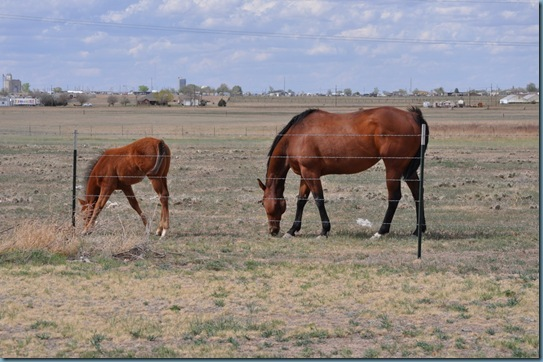 05-09-13 horses 18
