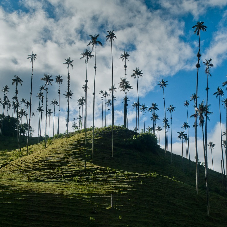 cocora-valley-7