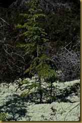 Boreal forest D7K_8287 NIKON D7000 June 19, 2011