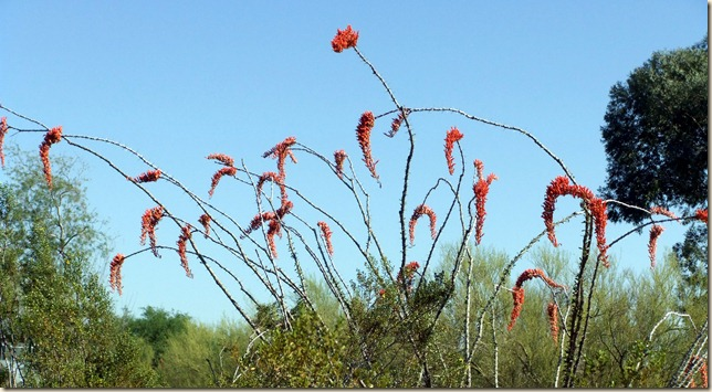 ocotillo 4-16-2012 8-58-08 AM 3616x1982