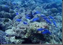 PC - diving fish