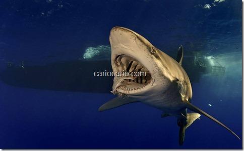 imagens Submarinas (2)