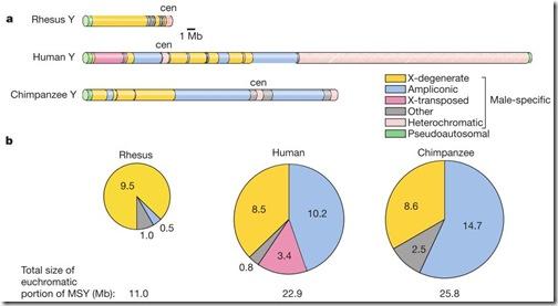 cromosoma_y_comparacion