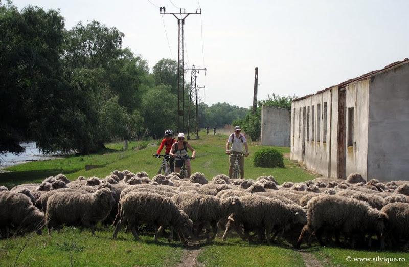 Cicloturism in Delta Dunarii