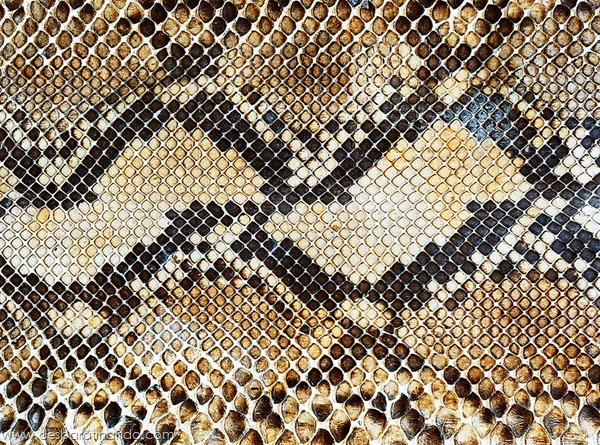 natureze-nature-padrao-pattern-desbaratinando (15)