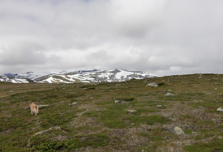 Tinn-Valdres-Sjoa juli 12018