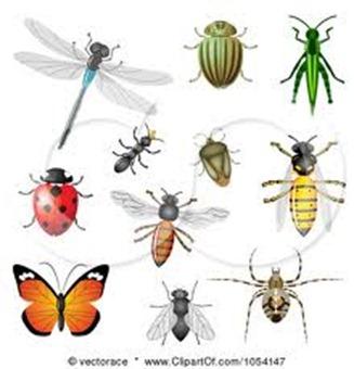 นิทานเรื่อง อดีตของแมลงสาบ