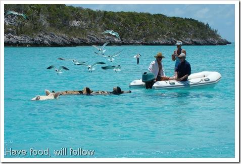 Staniel Cay, Bahamas 056