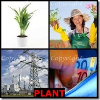 PLANT- 4 Pics 1 Word Answers 3 Letters