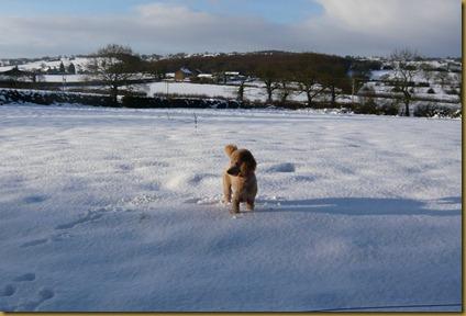 snow again8