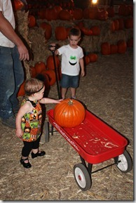 pumpkin patch 037