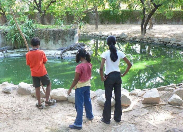 Unbelievable: Kids are training the crocodile