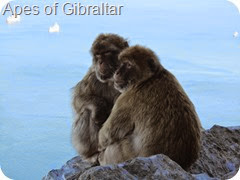 032 Apes of Gibraltar