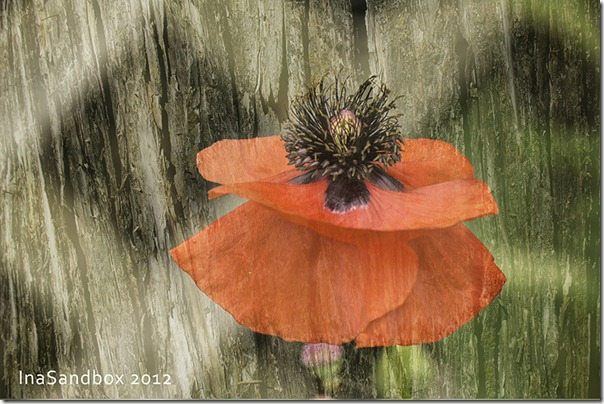 Poppy with textures 6-25