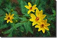 AE-WatercolorSponge-01-600