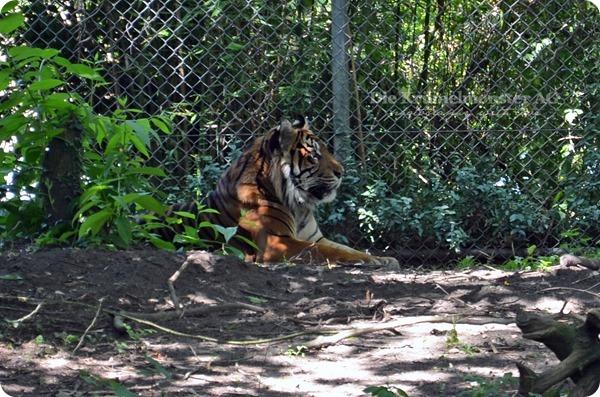 Zoo Frankfurt 100713 (96)