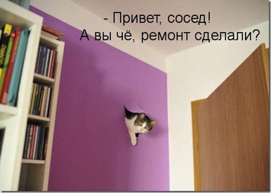 89305579_kotomatritsa_im