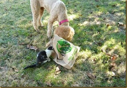 Lulu meets Daisy9a