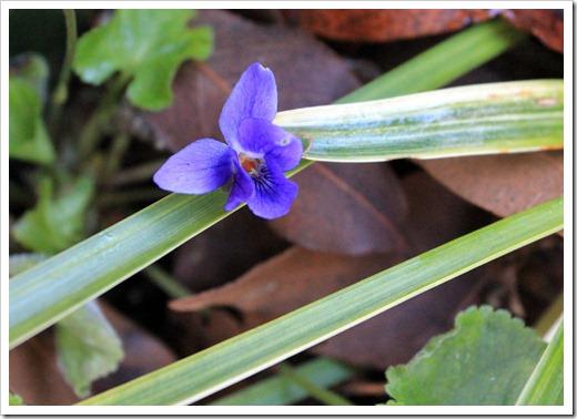 130110_violet
