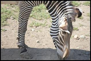 Zoo5 033