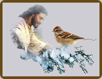 jesus-sparrow