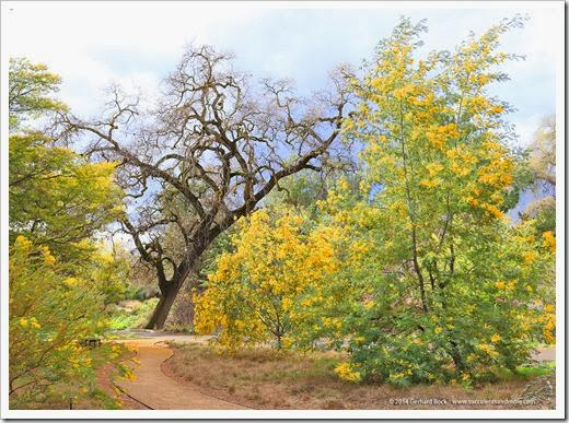 140301_UCD_Arboretum_0093