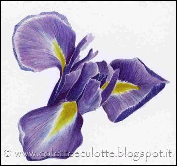 iris x