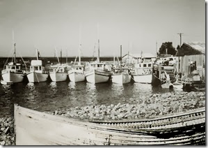 642-Tuna-boats-at-Huskisson-Wharf-rs