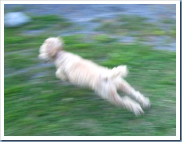 20110921_dogs_008