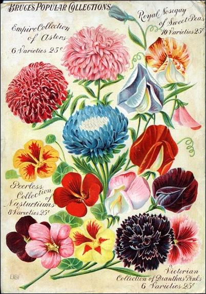 seed_variety
