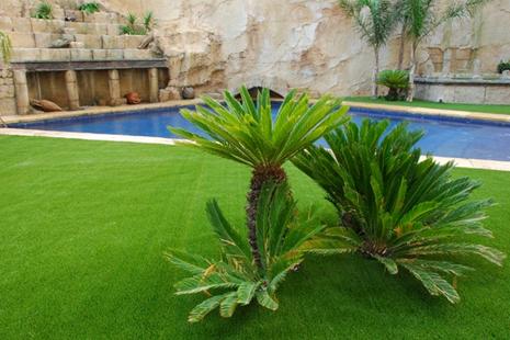 Como decorar un jard n con plantas dise o y decoracion for Como decorar un jardin con plantas